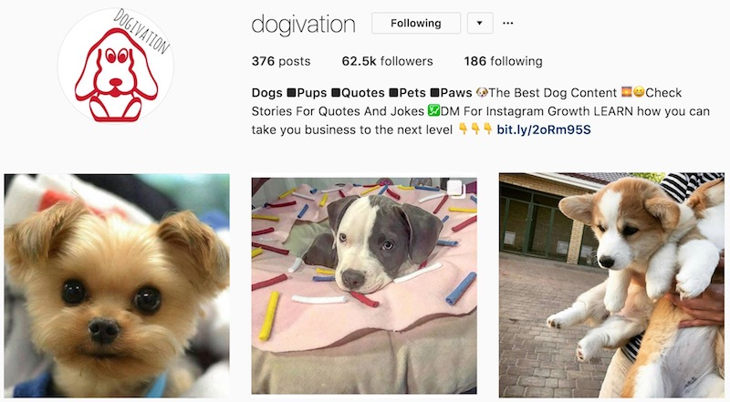 Dogs & Pets Instagram Success