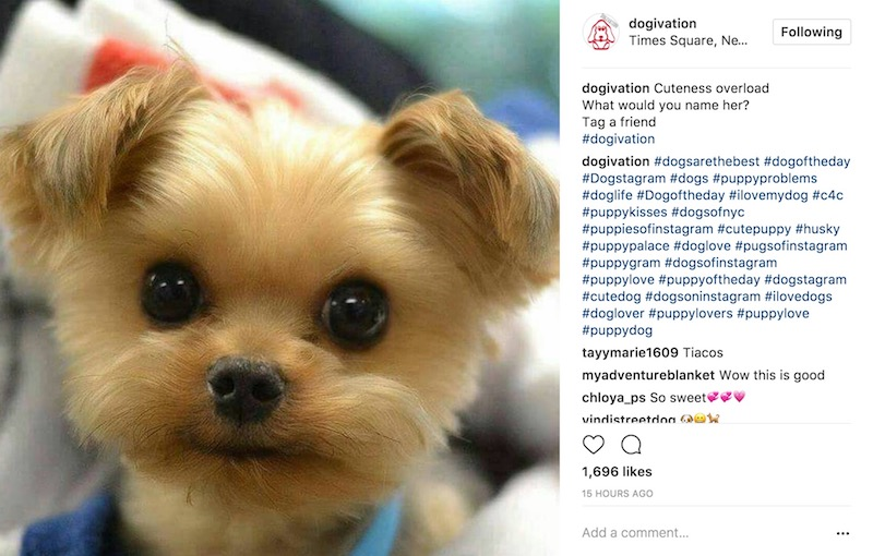 dogs & pets Instagram Photo