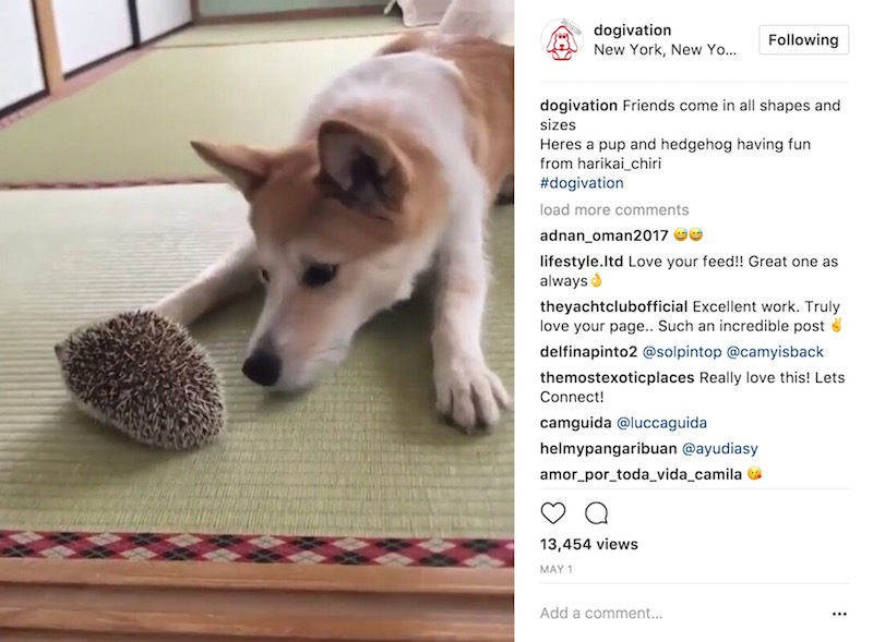dogs pets Instagram Videos