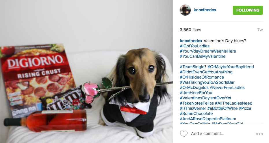 How To Make Money With Your Pet On Instagram